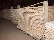 Производство черенков из березы